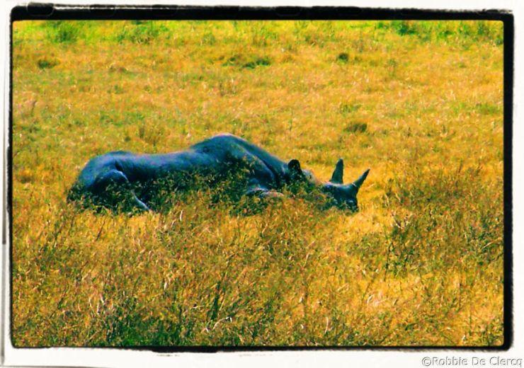 Ngorongoro (54)