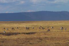 Ngorongoro (58)