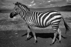 Ngorongoro (60)