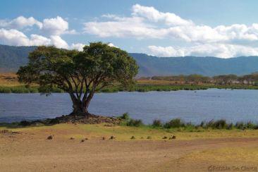 Ngorongoro (65)