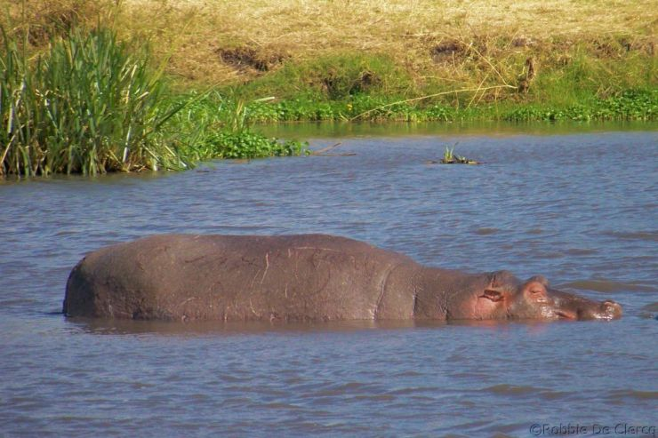 Ngorongoro (66)