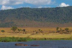 Ngorongoro (68)