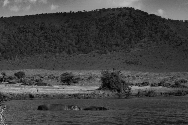 Ngorongoro (71)