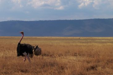 Ngorongoro (73)