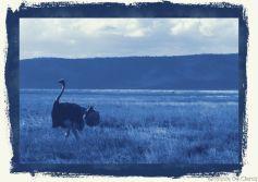 Ngorongoro (74)