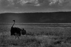 Ngorongoro (75)