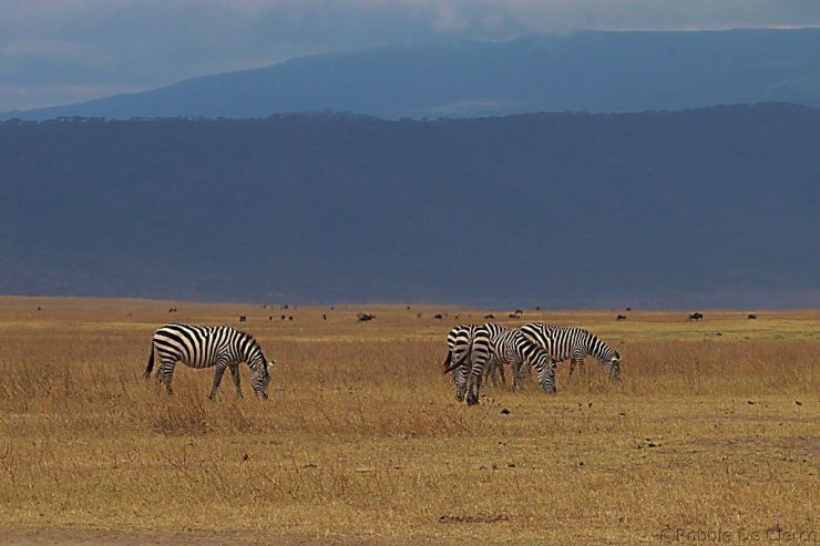 Ngorongoro (8)