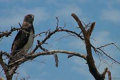 Serengeti National Park (10)