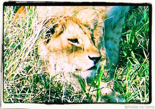 Serengeti National Park (100)