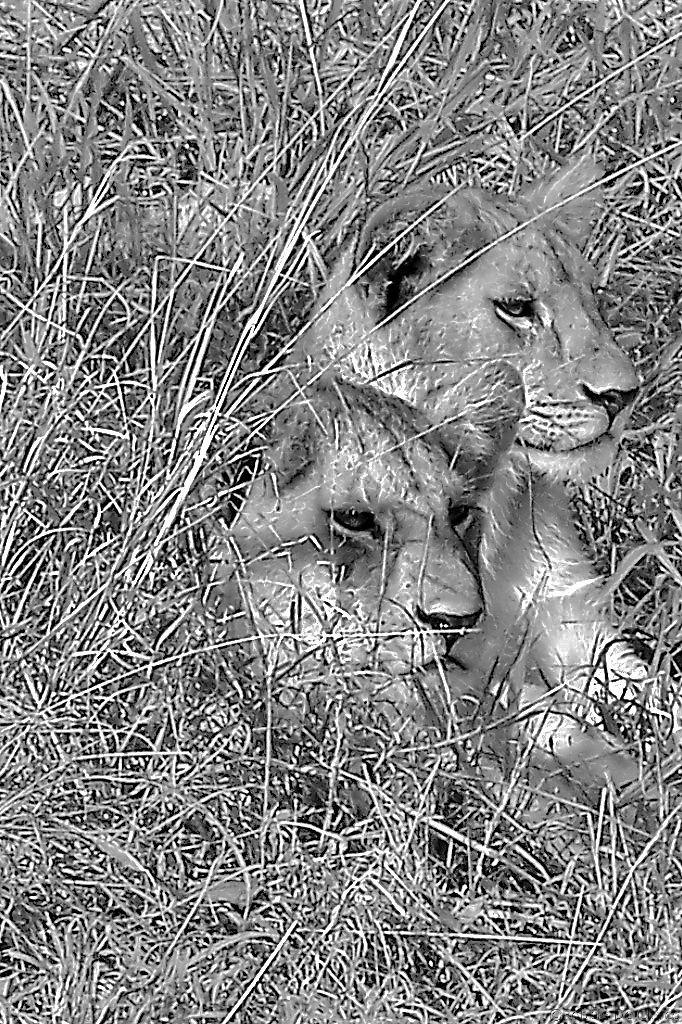 Serengeti National Park (101)