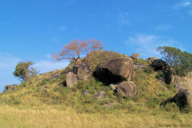 Serengeti National Park (103)