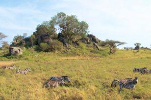 Serengeti National Park (104)