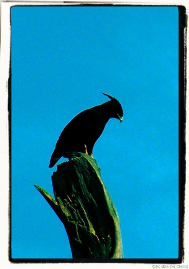 Serengeti National Park (105)