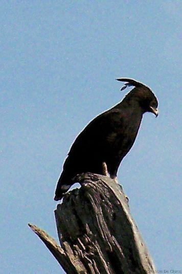 Serengeti National Park (106)