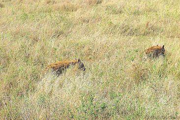 Serengeti National Park (113)