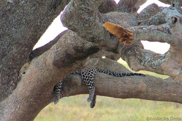 Serengeti National Park (114)