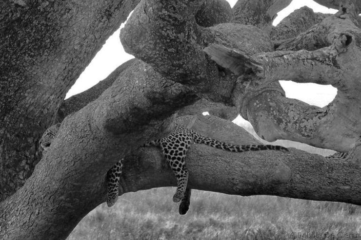 Serengeti National Park (117)