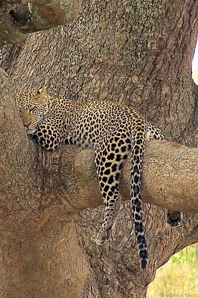 Serengeti National Park (121)