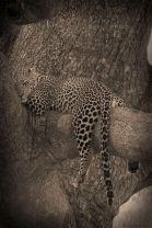 Serengeti National Park (122)