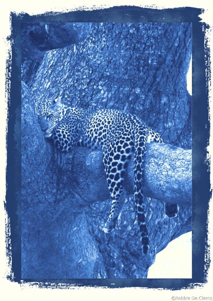 Serengeti National Park (123)