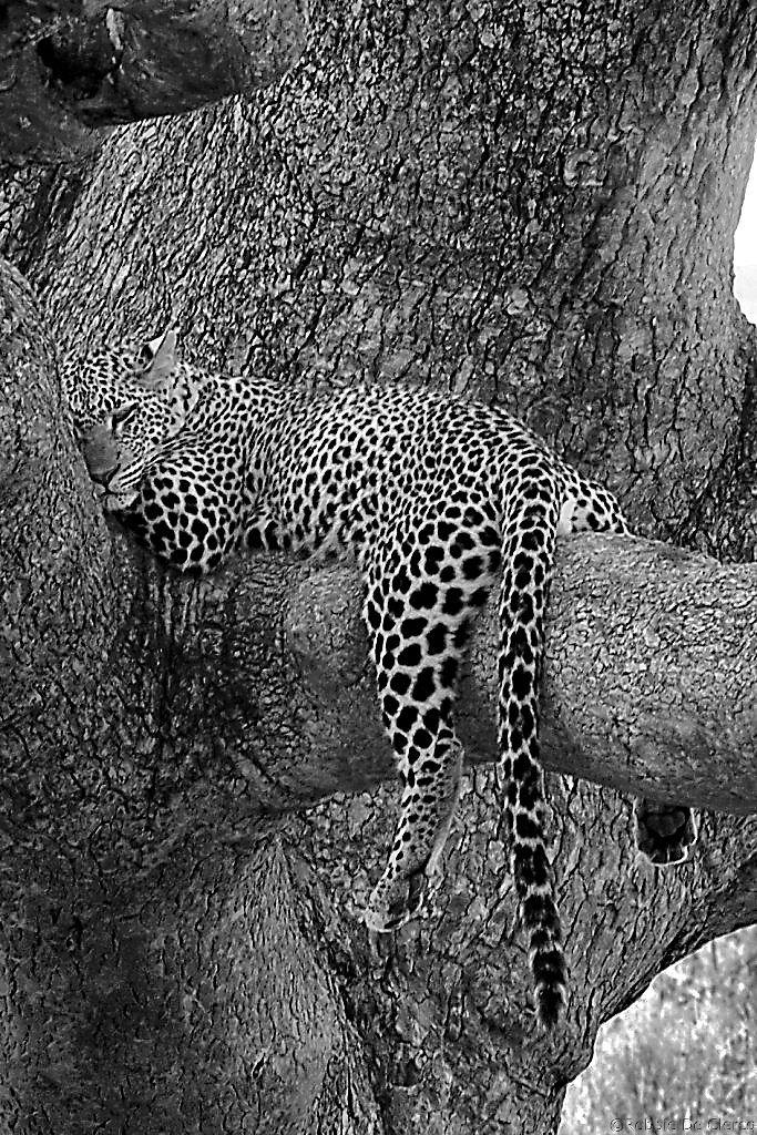Serengeti National Park (124)