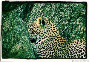 Serengeti National Park (125)