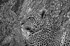 Serengeti National Park (126)