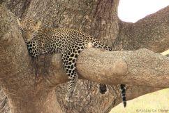 Serengeti National Park (127)