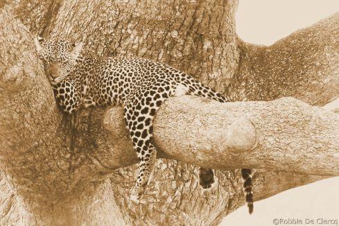Serengeti National Park (128)