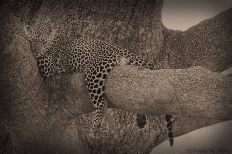 Serengeti National Park (129)