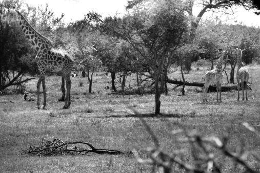 Serengeti National Park (13)