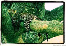 Serengeti National Park (131)
