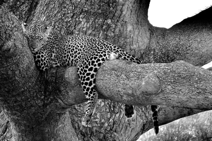 Serengeti National Park (132)