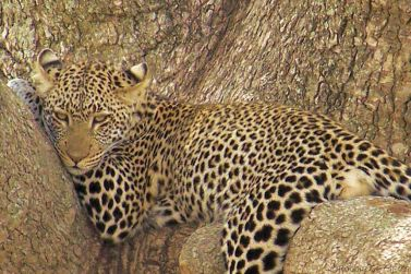 Serengeti National Park (135)