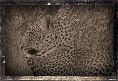 Serengeti National Park (136)