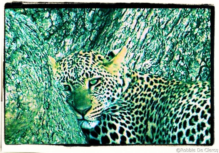 Serengeti National Park (137)