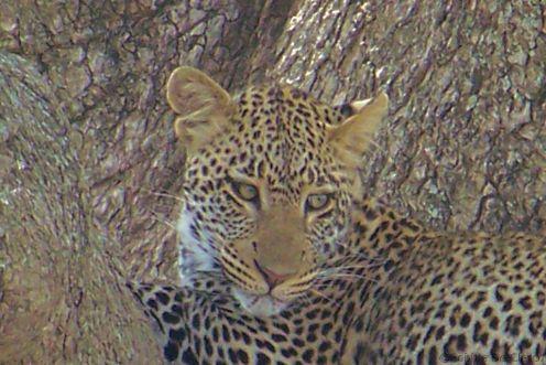 Serengeti National Park (138)