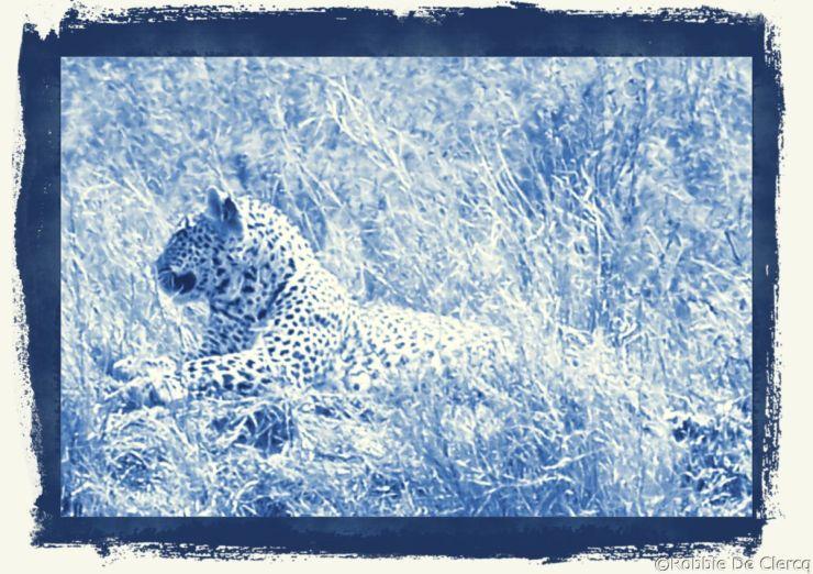 Serengeti National Park (139)