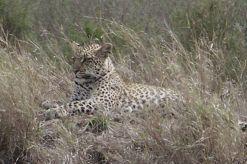 Serengeti National Park (140)