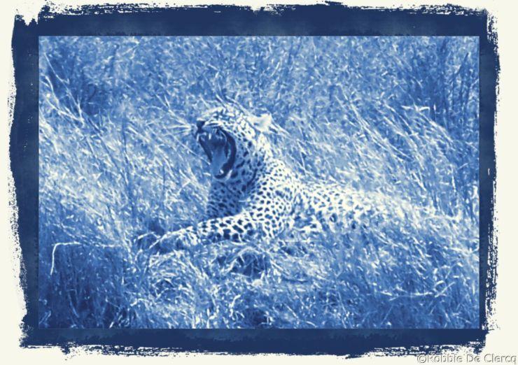 Serengeti National Park (141)