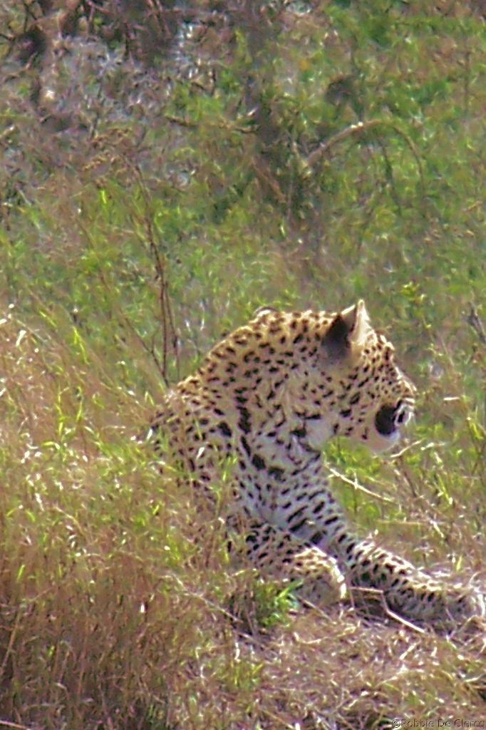 Serengeti National Park (143)