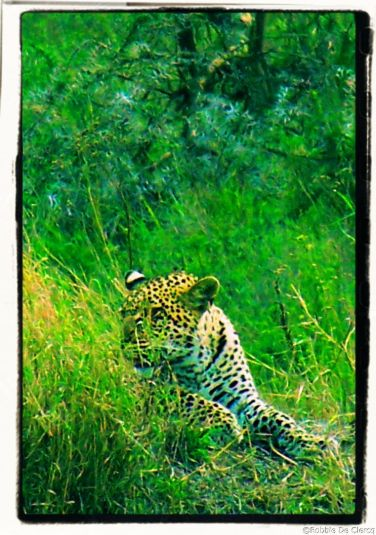 Serengeti National Park (145)