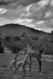 Serengeti National Park (15)