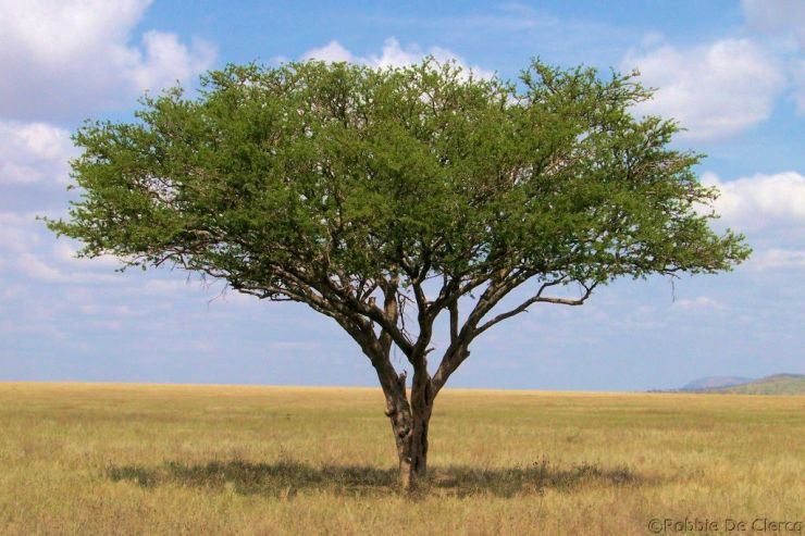 Serengeti National Park (151)