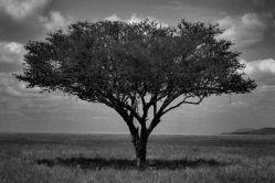 Serengeti National Park (152)
