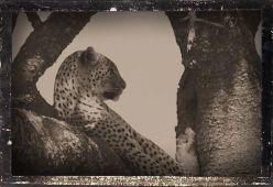 Serengeti National Park (153)