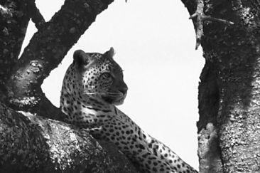 Serengeti National Park (155)