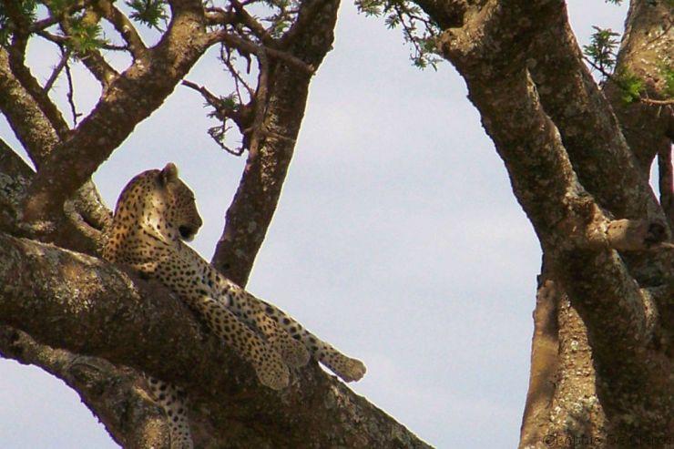 Serengeti National Park (156)
