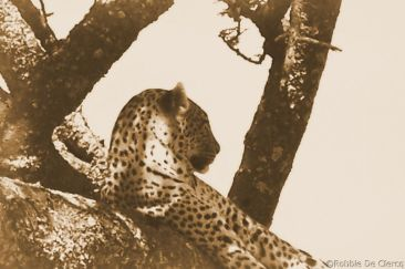 Serengeti National Park (157)