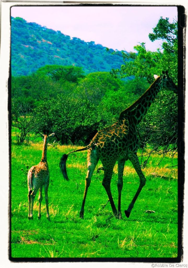 Serengeti National Park (16)